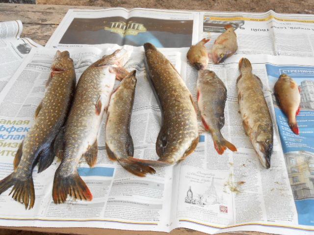 Отчеты о рыбалке База отдыха Весьегонский остров Рыбалка на Рыбинском водохранилище Река Молога База отдыха Весьегонский остров 10 12 июня 2012