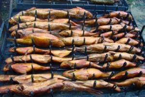 vo-spring2012-luckyfishing